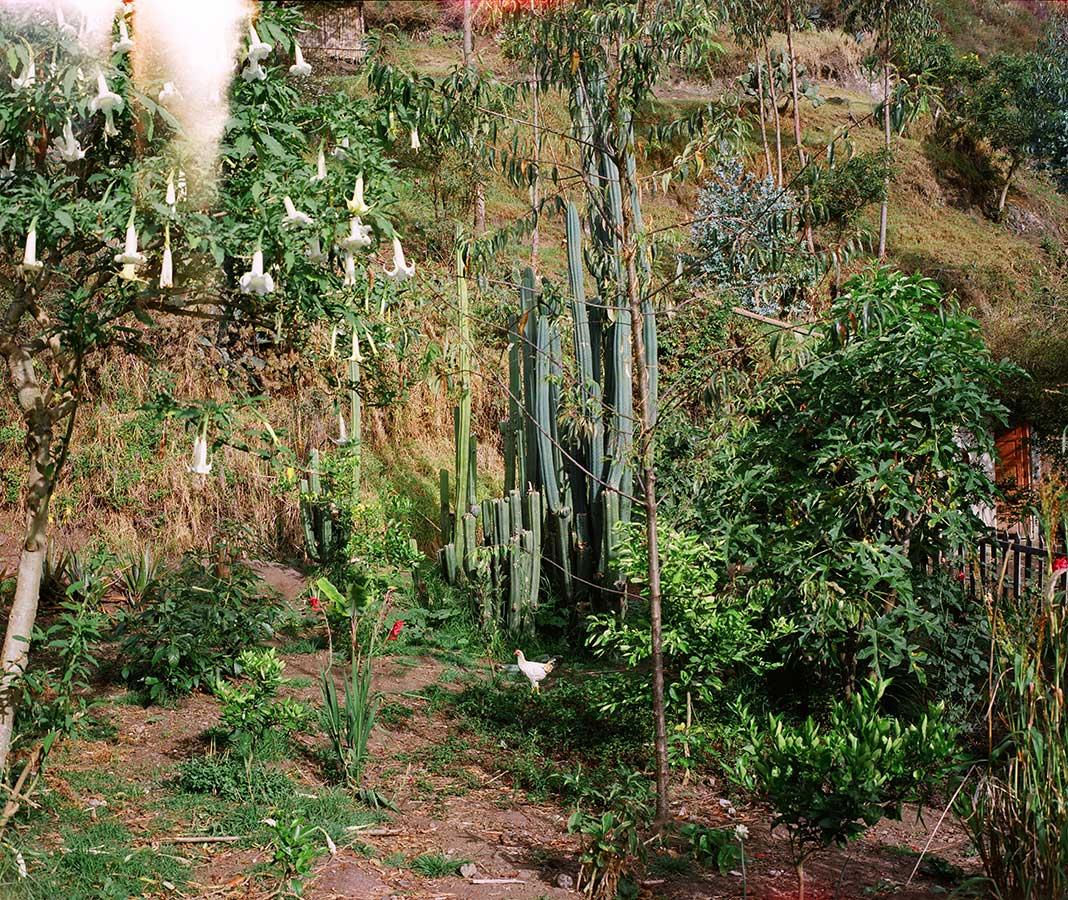 Louidgi Beltrame, Jardín medicinal, San Pedro, Flor y Pondio