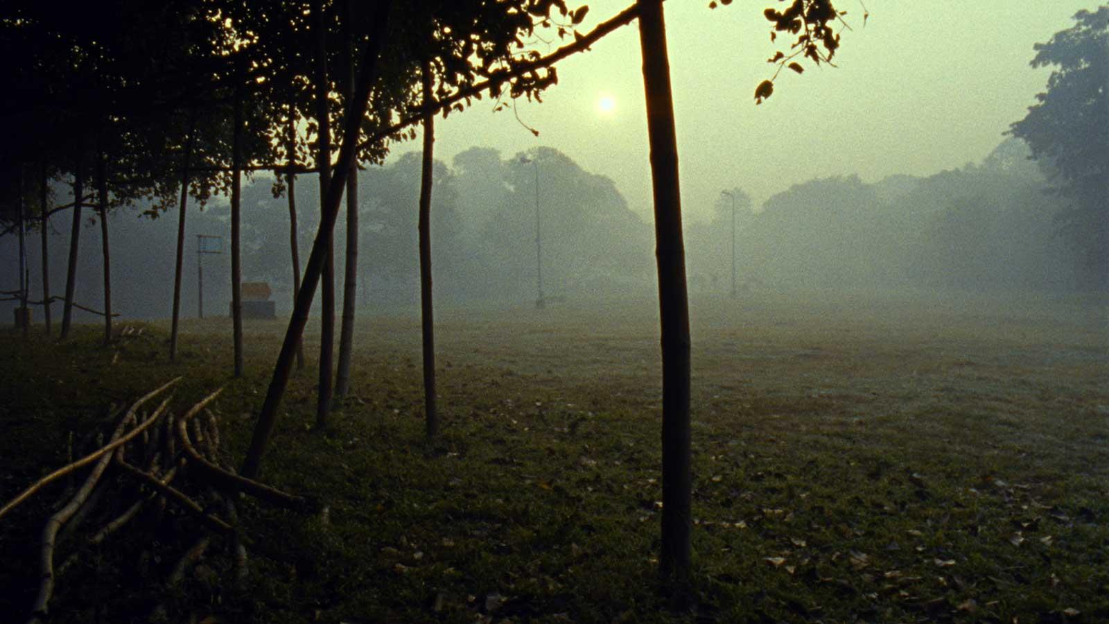 Louidgi Beltrame, The Walking Tree