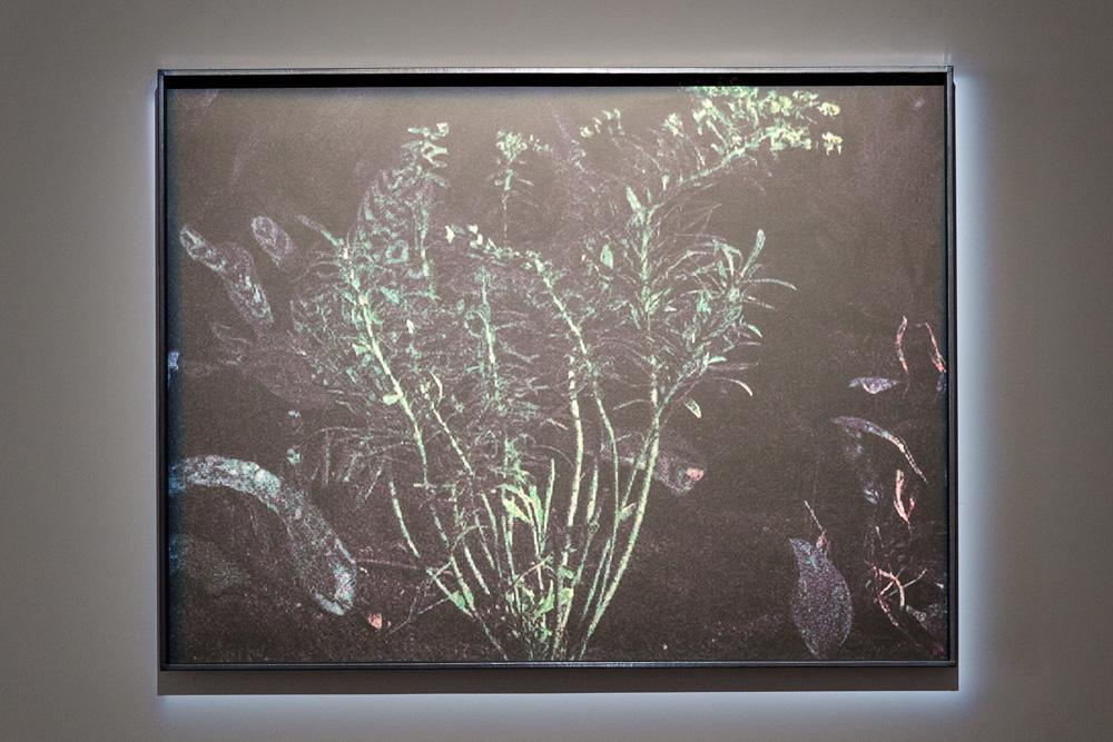 Anne-Charlotte Finel, Jardins
