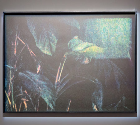 Anne-Charlotte Finel, Jardins, sérigraphie, 2017, 49,5 x 65,5 cm