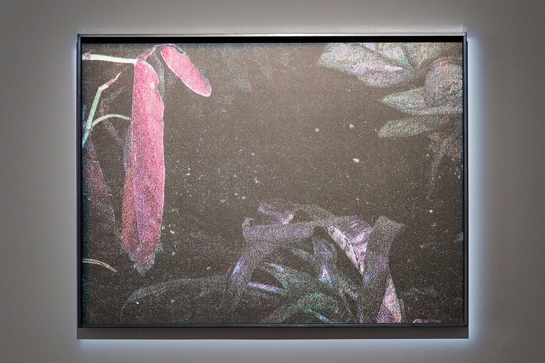 Anne-Charlotte Finel, Jardins, sérigraphie, 2017