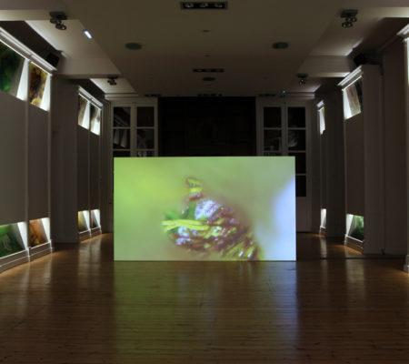 Anne-Charlote Finel, Des sirènes au fond des prunelles, Centre d'art le Lait, 2019