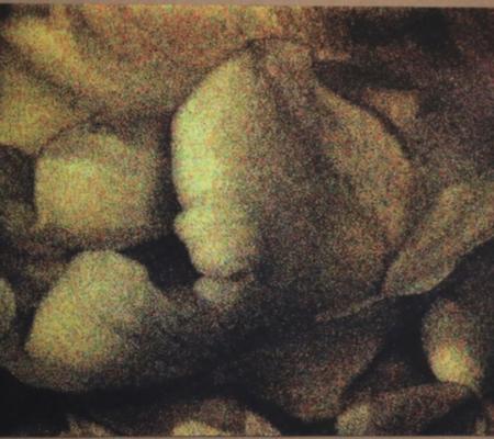 Anne-Charlotte Finel, Triste champignionniste 1, sérigraphie (quadrichromie), 2017, 45 x 60 cm