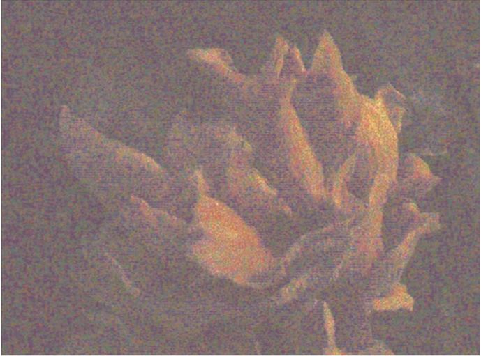 Anne-Charlotte Finel, Triste champignonniste 3, sérigraphie (trichomie), 2017, 28 x 37,5 cm