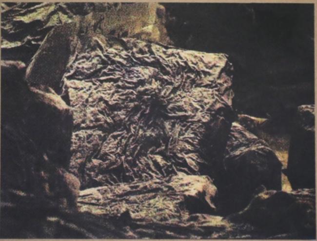 Anne-Charlotte Finel, Triste champignionniste 2, sérigraphie (quadrichromie), 2017, 45 x 60 cm