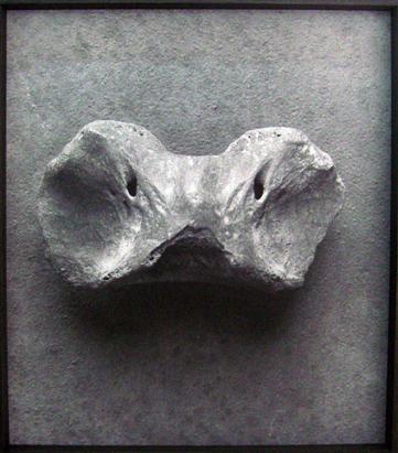 Ariane Michel, Les ancêtres, 2010, photographie argentique,dimensions variables