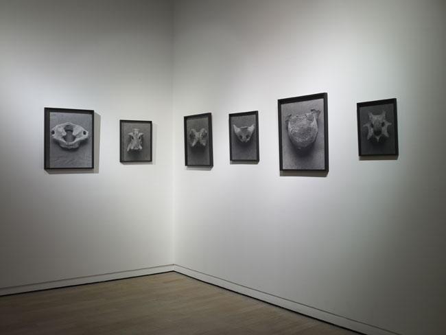 Ariane Michel, Les Ancêtres, 2010, série de photographies tirage argentique