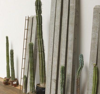 """Rometti Costales, """"Succulent Strategies / Estrategias Suculentas"""", 2014, cactus, 18 poteaux de béton et barres de renforcement, dimensions variables"""
