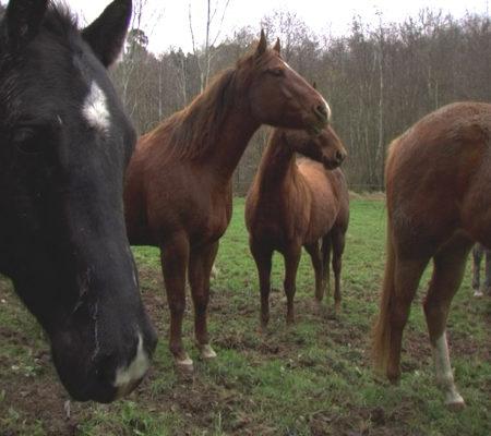 "Ariane Michel, ""Rêve de cheval"", 2004, vidéo, 10'"