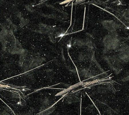 "Gerridae, 2020, vidéo HD, musique de Voiski, 4'11""_3web"