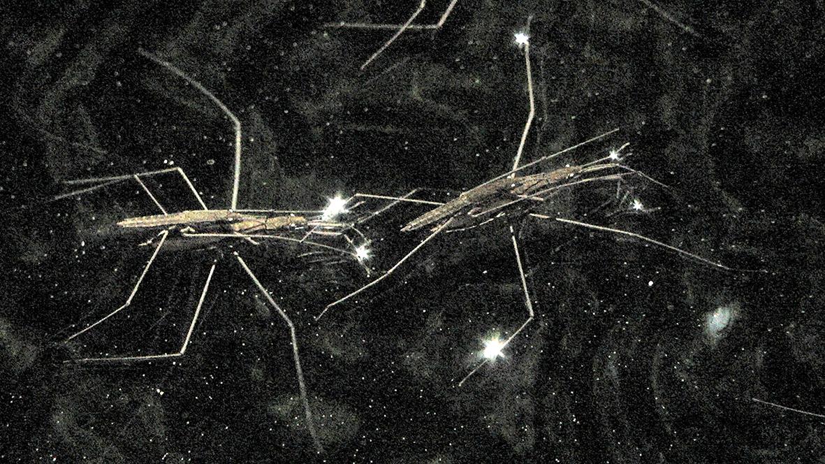 "Gerridae, 2020, vidéo HD, musique de Voiski, 4'11""_4web"