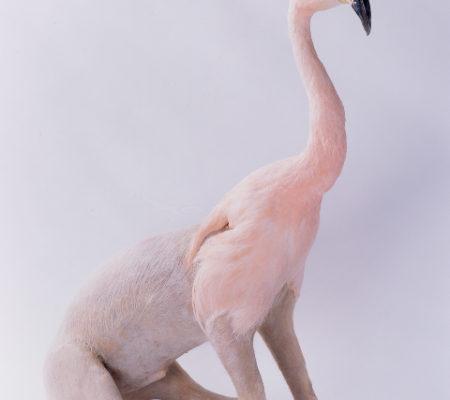 Flamingo:pig